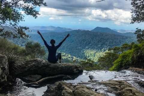 Springbrook National Park and Tamborine Rainforest Day Tour
