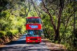 Blue Mountains Hop on Hop off & Scenic World Rides Pass