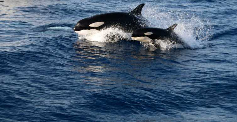 From Seville: Tarifa Whale Watching Day Trip