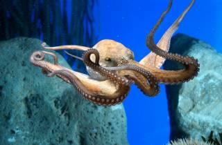 Ab Lloret de Mar: Barcelona-Tagestour mit Aquarium-Besuch