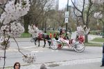 New York City: Romantic Central Park Carriage Ride
