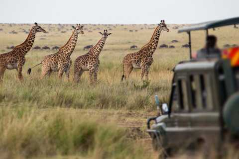 Cape Town: 2-Day Safari at Inverdoorn Game Reserve