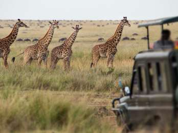 Kapstadt: 2-Tages-Safari im Inverdoorn Game Reserve