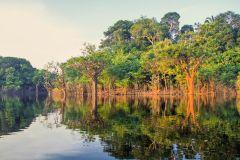 Manaus: Excursão a Pé de Meio-Dia na Selva Amazônica