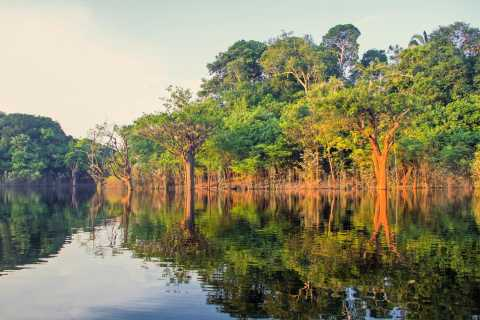 Manaus: Amazon Jungle Half-Day Walking Tour