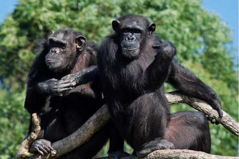 Nelspruit: Chimp Eden and Sudwala Caves Experience