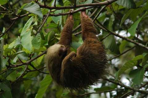 La Fortuna: Guided Twilight Wildlife Safari