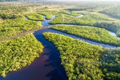 Trilha 8 Horas Floresta Amazônica e Arquipélago Anavilhanas
