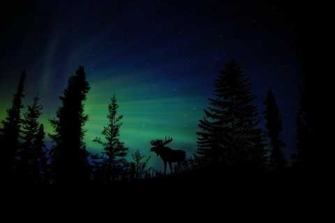 Northern Lights & Chena Hot Springs Tour
