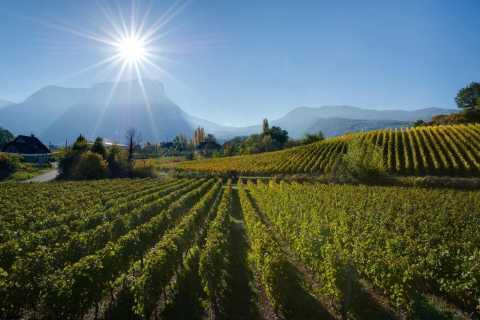 Aix-les-Bains / Chambéry: Expérience Vignobles Savoie