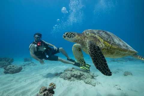 Waikiki: Oahu Discovery Scuba Diving for Beginners
