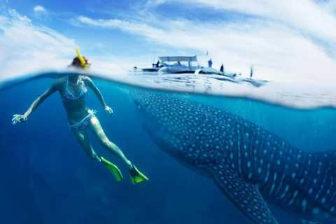 From Cebu: Private Whale Shark Tour & Tumalog Falls Option