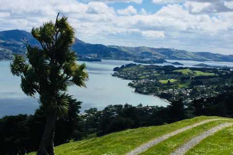 Dunedin: City Highlights and Otago Peninsula Scenery