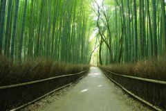 De Osaka: Viagem de um dia com os melhores momentos de Kyoto