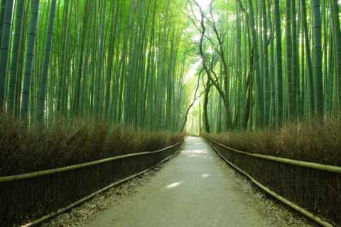 From Osaka: Kyoto Top Highlights Day Trip