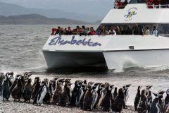 De Ushuaia: Passeio de Catamarã com Observação de Pinguins
