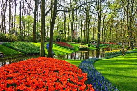 Keukenhof Gardens and Tulip Tour from Amsterdam
