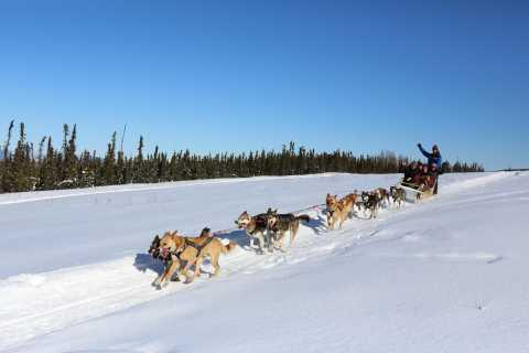 1-Hour Winter Dog Mushing & Sledding in Alaska