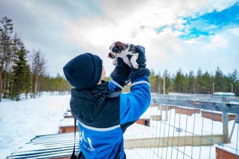 Rovaniemi: Husky Safari on a Snowy Trail