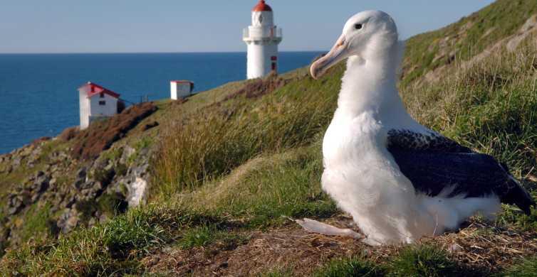Van Dunedin: Royal Albatross Centre & Otago Peninsula Tour