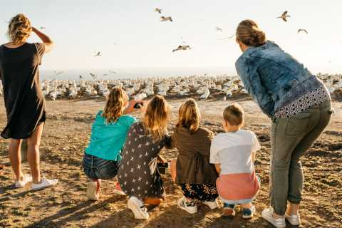 Napier: Cape Kidnappers Gannet, Nature & Sightseeing Tour