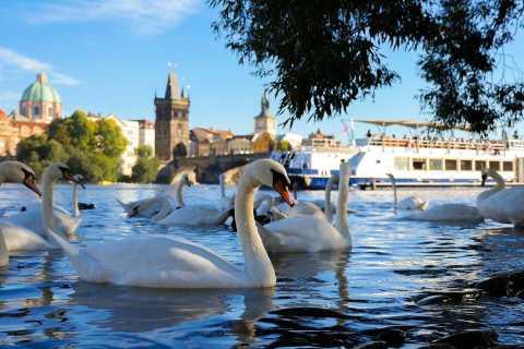 Prag: 50 minuters sightseeing på floden