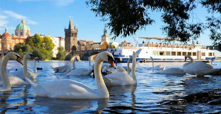 Praga: crucero panorámico de 50 minutos