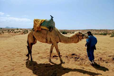 Agadir: Sahara Desert Full-Day Tour With Lunch