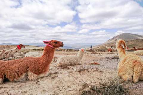 From Arequipa: Colca Canyon 2-Day Tour