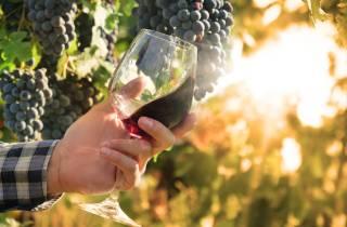 Aus Rom: Weinberg- und Weinverkostungstour Castelli Romani