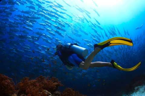 Ko Tao: Try Scuba Diving 1-Day Experience