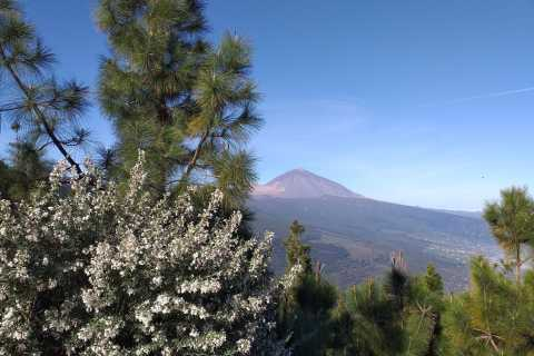 Tenerife: Small-Group Total Experience Tour