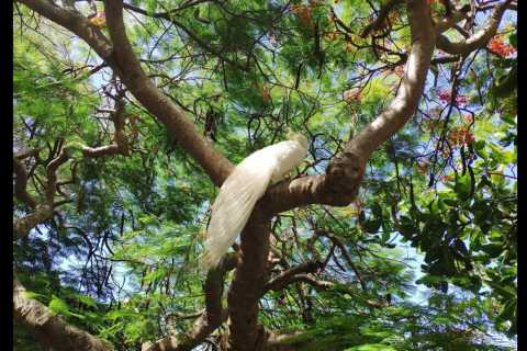 Noumea: Botanical Park & Zoo Trip from Cruise Ship Terminal