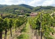 Chianti: Wein- und Ölverkostung aus Florenz