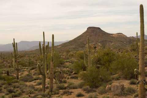 Scottsdale: Half-Day Sonoran Desert Hiking Tour