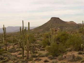 Scottsdale: Halbtägige Sonora-Wüstenwanderung