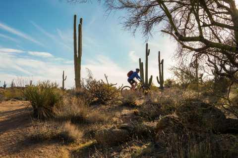 Scottsdale: Half-Day Sonoran Desert Mountain Bike Tour