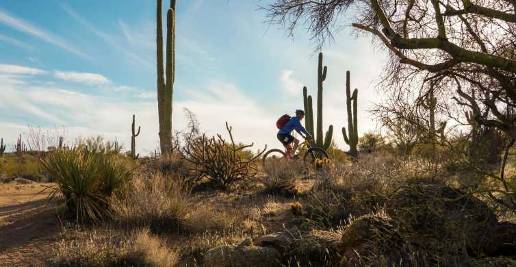 Scottsdale: Half-Day Sonoran Desert Mountain Bike Tour