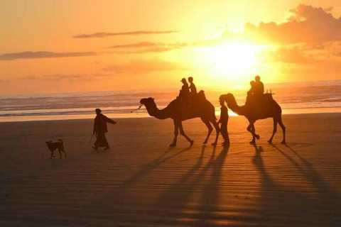 Agadir: 2-Hour Camel Ride on Banana Beach at Sunset