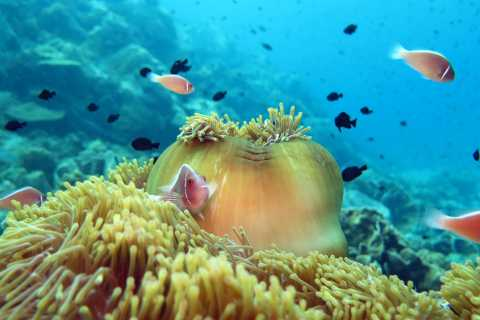 Koh Chang: Full-Day Reefs or Wreck Sites Snorkeling Trip