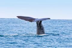 San Diego baleias e golfinhos Cruises