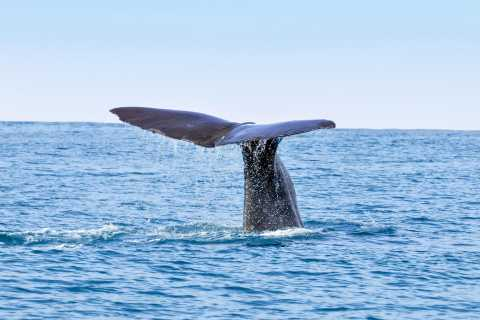 San Diego Whale and Dolphin Watching Cruises