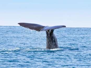 San Diego: Bootsfahrt mit Wal- und Delfinbeobachtung