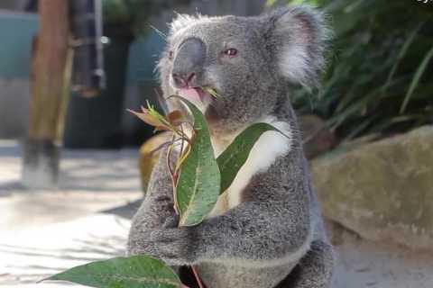 Cairns: Full-Day Self-Guided Wildlife Habitat Tour