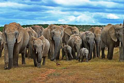 Garden Route and Addo Elephant National Park: 6-Day Safari