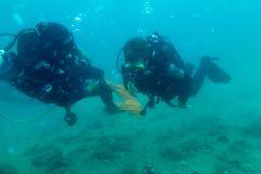 Curso PADI / SSI Scuba Diver