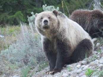 Ab Jackson: Yellowstone Day Tour inklusive Eintrittsgebühr