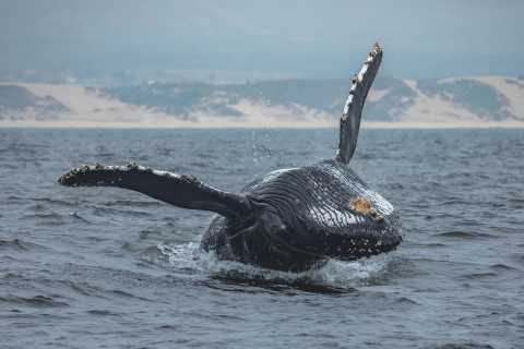 Monterey Bay: Whale Watching Tour