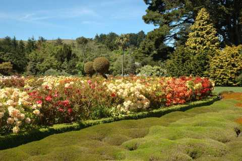 From Dunedin: Larnach Castle and Gardens Tour