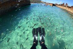 Ilha de Moreton: Cruzeiro de Safari Marinho Eco da Marina de Newport